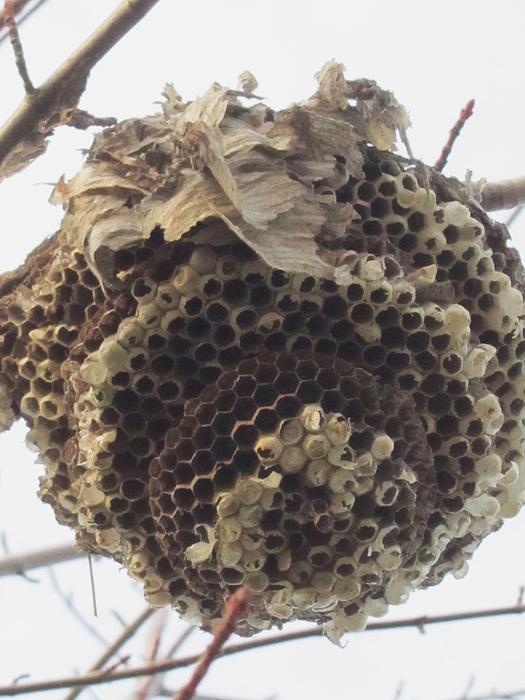 Hornets Nest Photograph by Todd Sherlock