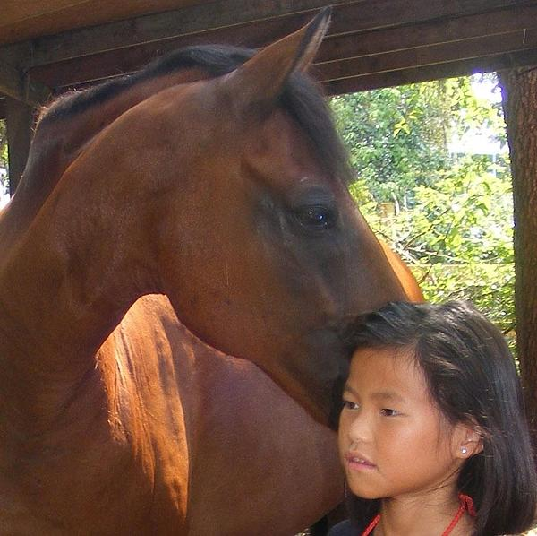Horse Photograph - Horses And Children by Rene Trebing