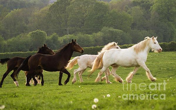 Horse Photograph - Horses On The Meadow by Angel  Tarantella