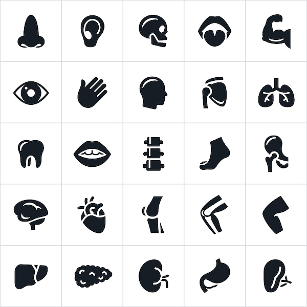 Human Body Parts Icons Drawing by Appleuzr