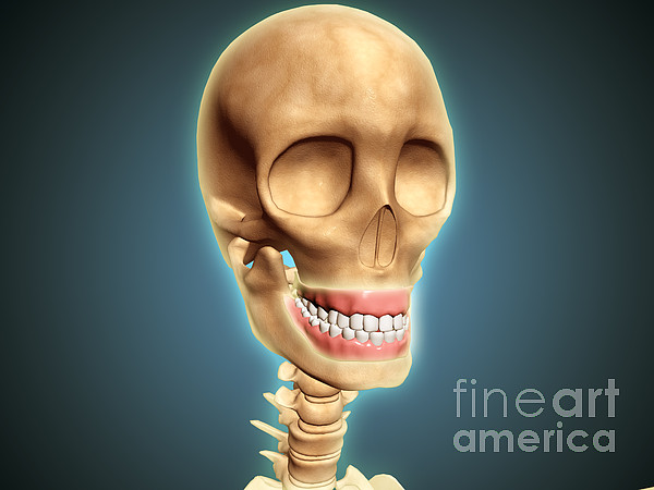 Oral Hygiene Digital Art - Human Skeleton Showing Teeth And Gums by Stocktrek Images