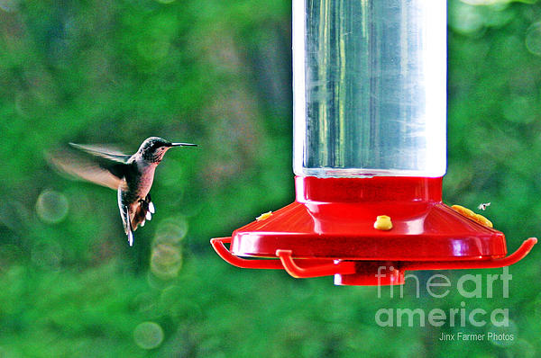 Hummingbird Photograph - Hummingbird Love by Jinx Farmer