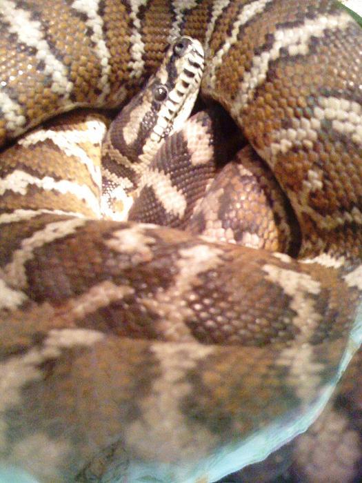 Snake Photograph - I C U by Julie Wilcox