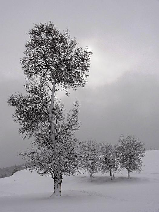 I Love You Snow Winter Scene Photograph by Faouzi Taleb