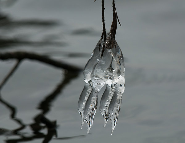Ice Photograph - Ice Dance by Lara Ellis