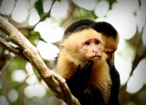 Monkey Photograph - Imagine by Ramon Fernandez