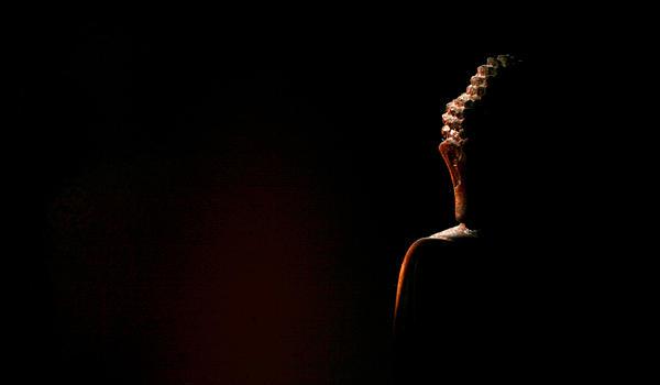 Buddha Photograph - Impermanence by Ramon Fernandez
