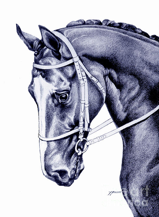 Horse Drawing - In Check by Patricia Howitt