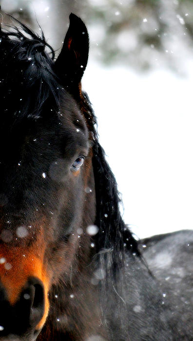 Horse Photograph - In The Snow by Emily Stauring