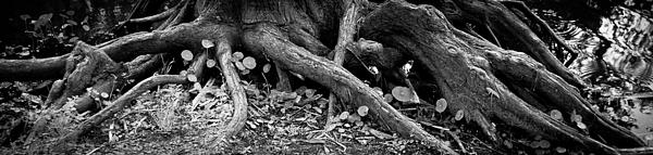 Tree Photograph - Infrastructure by Toni Boone