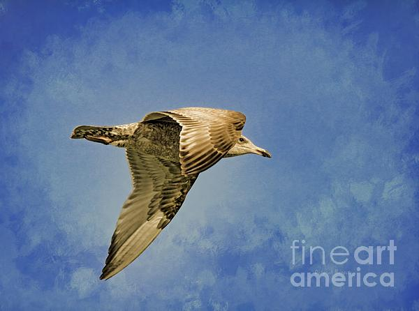 Seagull Photograph - Into The Blue by Deborah Benoit
