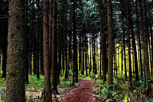 Woods Photograph - Into The Woods by Allan Millora