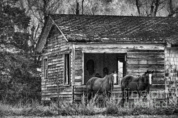 Old House Photograph - Is This Our Barn by Betty LaRue