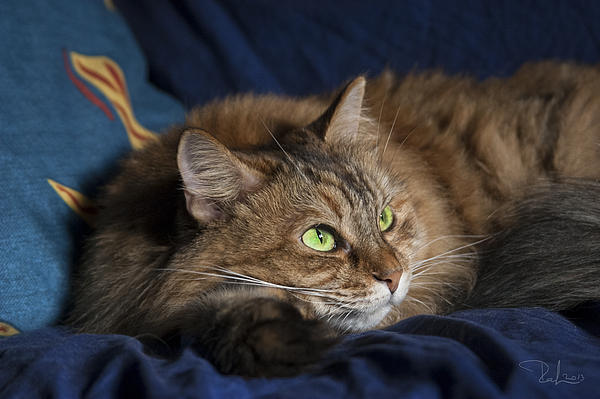 Cat Photograph - Jade Eyes In The Blue by Raffaella Lunelli