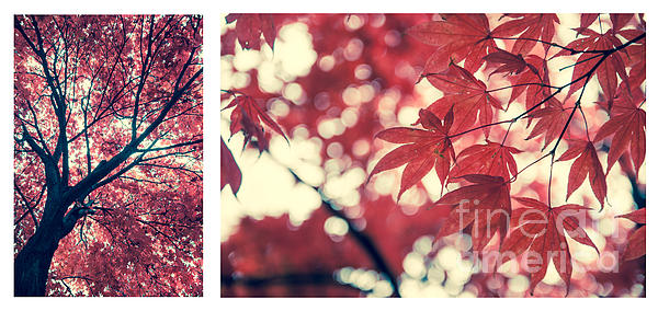 Autumn Photograph - Japanese Maple Collage by Hannes Cmarits