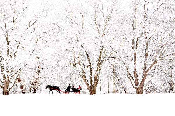 Horse Photograph - Jingle Bells by Emily Stauring