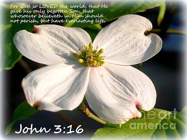John 3:16 Photograph - John 3-16/dogwood Legend by Kathy  White