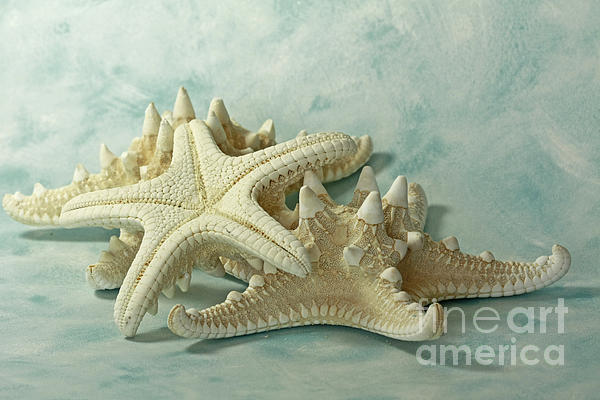 Journey Photograph - Journey To The Sea Starfish by Inspired Nature Photography Fine Art Photography