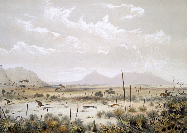 Immigration Drawing - Kangaroo Hunting Near Port Lincoln by George French Angas