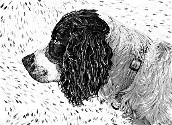 Dog Photograph - Kaya Wood Carving Filter by Steve Harrington