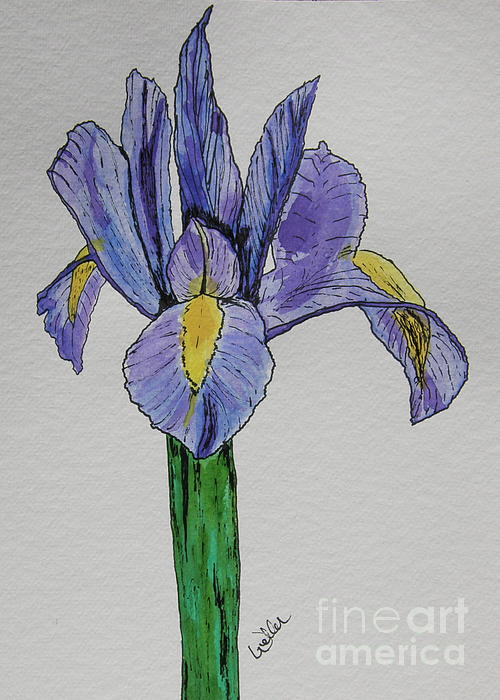 Iris Painting - Kristinas Iris by Marcia Weller-Wenbert