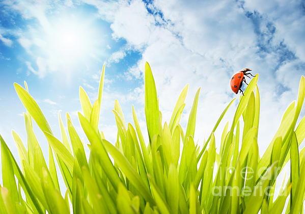 Ladybug Photograph - Ladybug by Boon Mee