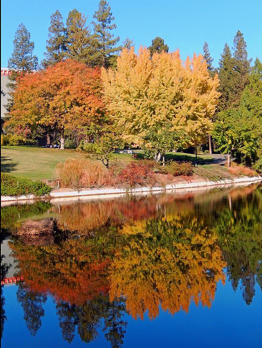 Uc Davis Photograph - Lake At Davis by Jim Halas