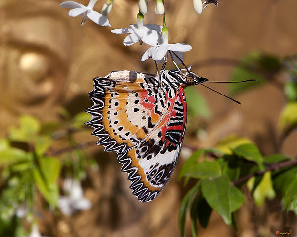 Scenic Photograph - Leopard Lacewing Butterfly Dthu619 by Gerry Gantt