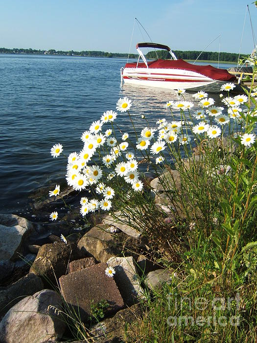 Daisies Photograph - Lets Go by Margaret McDermott