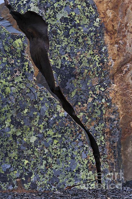 Lichen Photograph - Lichen On Granite by Heiko Koehrer-Wagner