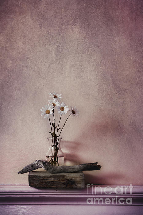 Wildflower Photograph - Life Gives You Daisies by Priska Wettstein