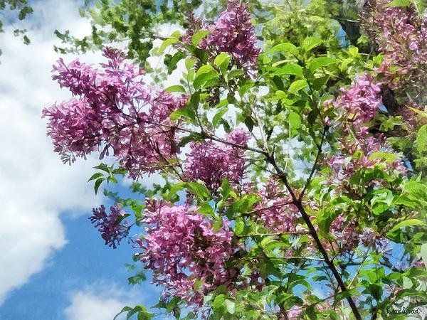 Lilacs Photograph - Lilacs And Clouds by Susan Savad