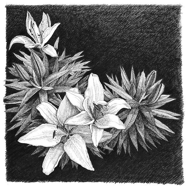 Lilies Drawing - Lilies In Pen And Ink by Janet King