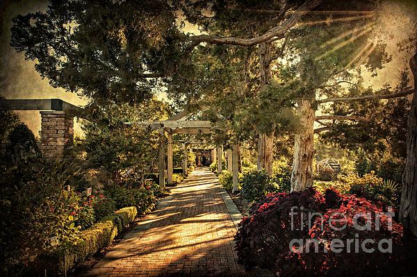 Tulsa Photograph - Linnaeus Teaching Garden by Tamyra Ayles