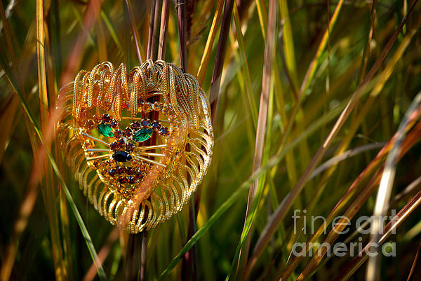 Costume Jewelry Photograph - Lion In The Grass by Amy Cicconi