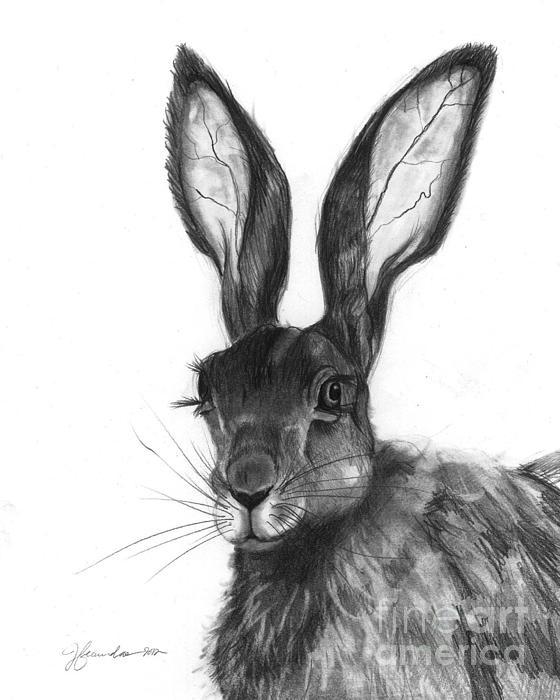 Hare Drawing - Listening Ears by J Ferwerda