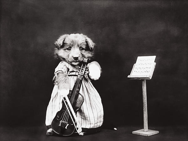 Dog Photograph - Little Fiddler by Aged Pixel