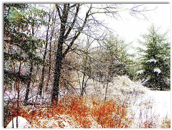 Little January  Photograph by Dianne  Lacourciere