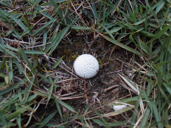 White Photograph - Little White Mushroom by Jenna Mengersen