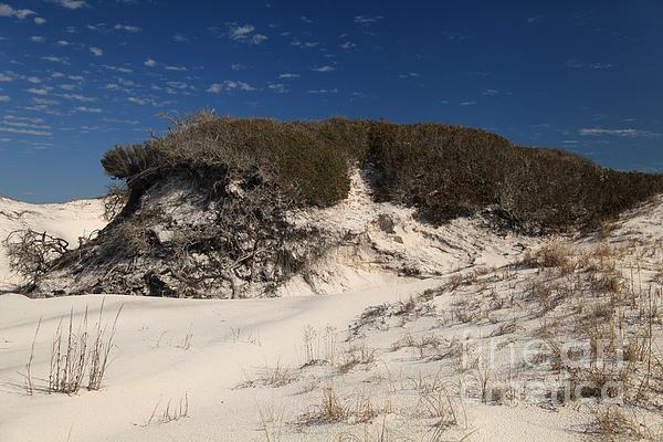 St Joseph Peninsula State Park Photograph - Lively Dunes by Adam Jewell