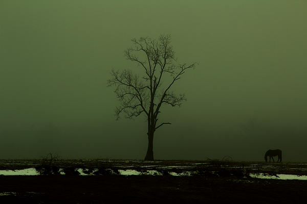 Horse Photograph - Lone Horse by Andrea Galiffi