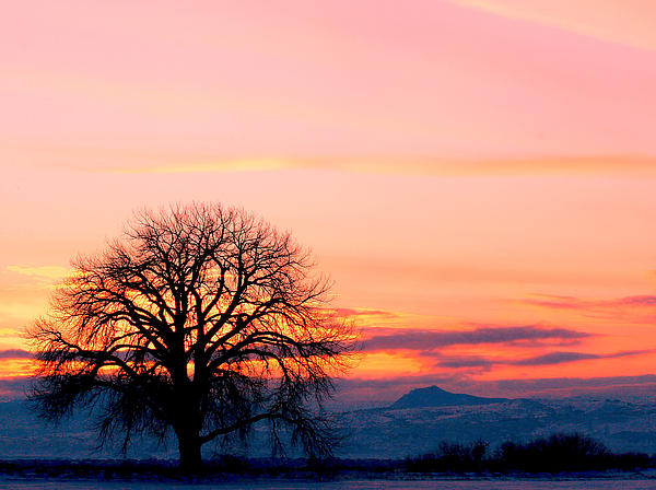Lone Tree Photograph - Lone Tree 1 by Rebecca Adams