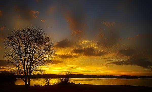 Lone Tree Sunrise Photograph by Dan Holland