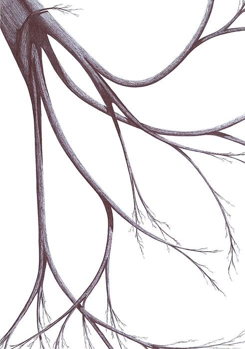 Planet Drawing - Long Branches by Giuseppe Epifani