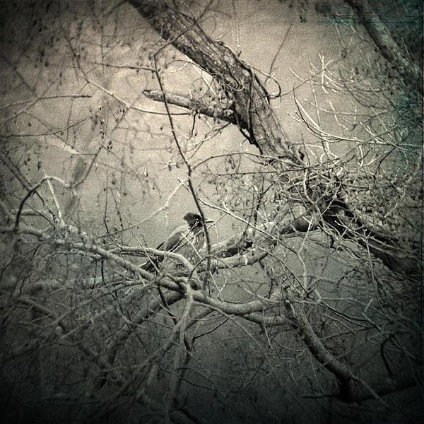 Branches Photograph - Lontano by Taylan Apukovska