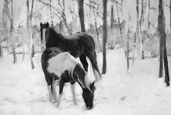 Horse Photograph - Looking For A Bite by Kathy Jennings