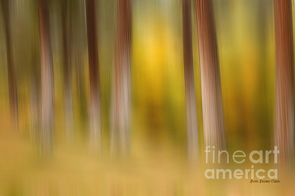 Abstract Photograph - Lost In Autumn by Beve Brown-Clark Photography