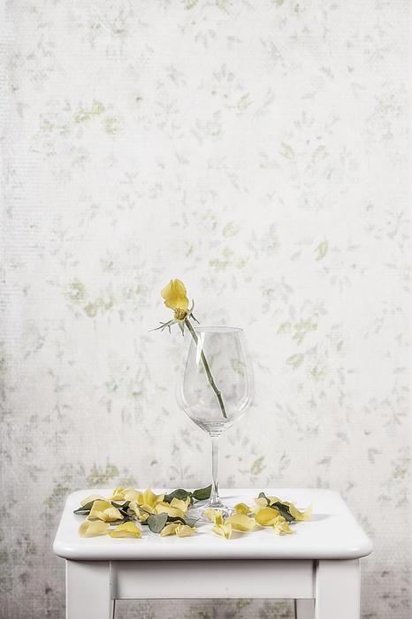 Rose Photograph - Lost Petals by Joana Kruse