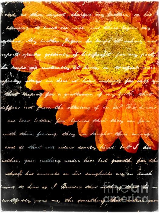 Flower Photograph - Love Letters by Edward Fielding