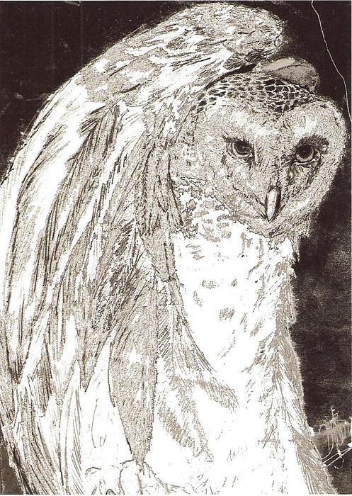 Wildlife Black And White Drawing - Love Owl by George Harrison